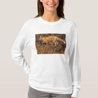red fox, Vulpes vulpes, in fall colors along the 3 T-Shirt