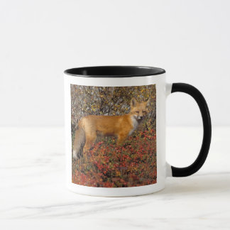 red fox, Vulpes vulpes, in fall colors along the 5 Mug