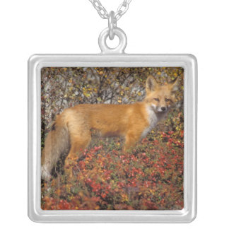 red fox, Vulpes vulpes, in fall colors along the 5 Personalized Necklace