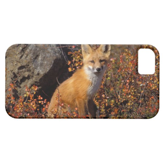 red fox, Vulpes vulpes, in fall colors along the iPhone SE/5/5s Case
