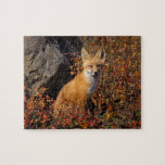 red fox, Vulpes vulpes, in fall colors along the Jigsaw Puzzle