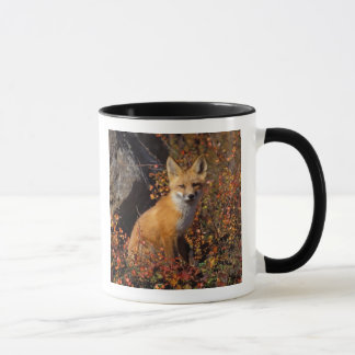 red fox, Vulpes vulpes, in fall colors along the Mug