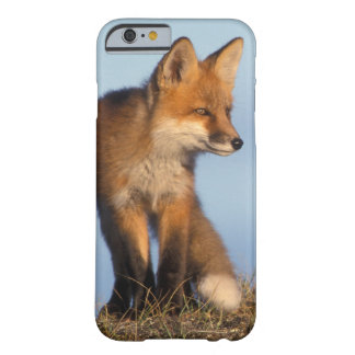 red fox, Vulpes vulpes, in the 1002 area of Barely There iPhone 6 Case