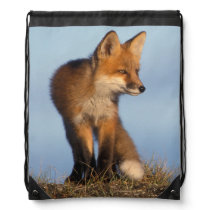 red fox, Vulpes vulpes, in the 1002 area of Drawstring Bag