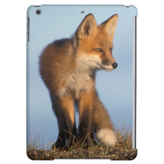 red fox, Vulpes vulpes, in the 1002 area of iPad Air Cases