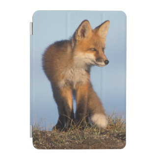red fox, Vulpes vulpes, in the 1002 area of iPad Mini Cover