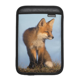 red fox, Vulpes vulpes, in the 1002 area of iPad Mini Sleeve