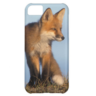 red fox, Vulpes vulpes, in the 1002 area of iPhone 5C Cover