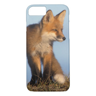 red fox, Vulpes vulpes, in the 1002 area of iPhone 7 Case
