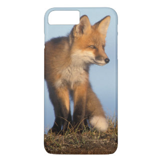 red fox, Vulpes vulpes, in the 1002 area of iPhone 7 Plus Case