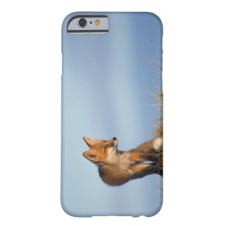 red fox, Vulpes vulpes, in the 1002 area of iPhone 6 Case
