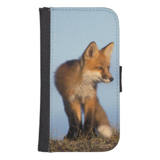 red fox, Vulpes vulpes, in the 1002 area of Phone Wallet