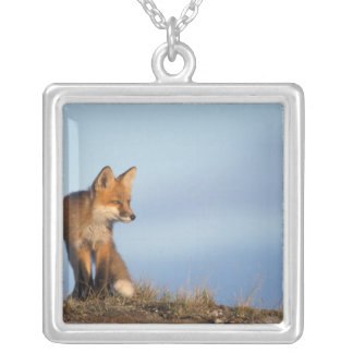 red fox, Vulpes vulpes, in the 1002 area of Silver Plated Necklace
