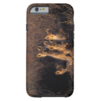 red fox, Vulpes vulpes, kits on their den in the iPhone 6 Case