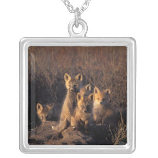 red fox, Vulpes vulpes, kits on their den in the Silver Plated Necklace