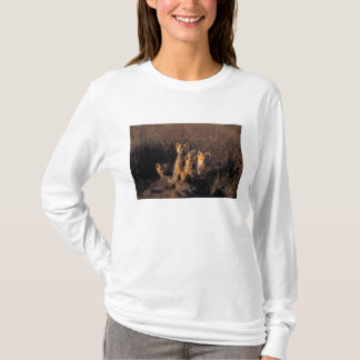 red fox, Vulpes vulpes, kits on their den in the T-Shirt