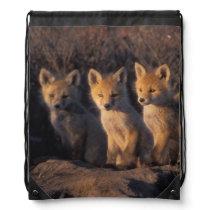 red fox, Vulpes vulpes, kits outside their Drawstring Backpack