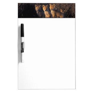 red fox, Vulpes vulpes, kits outside their Dry-Erase Board