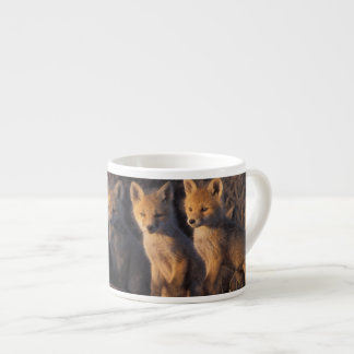 red fox, Vulpes vulpes, kits outside their Espresso Cup