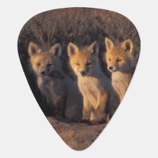 red fox, Vulpes vulpes, kits outside their Guitar Pick