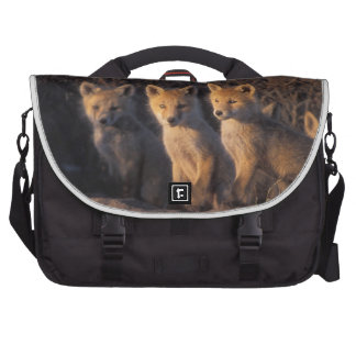 red fox, Vulpes vulpes, kits outside their Bag For Laptop