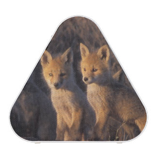 red fox, Vulpes vulpes, kits outside their Bluetooth Speaker