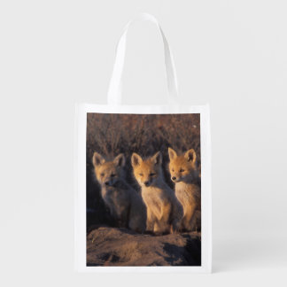 red fox, Vulpes vulpes, kits outside their Reusable Grocery Bag