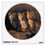 red fox, Vulpes vulpes, kits outside their Wall Sticker