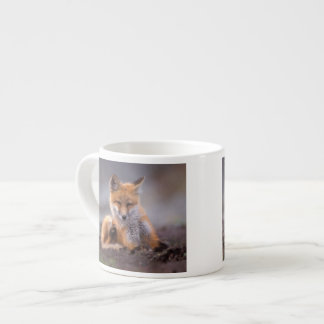 red fox, Vulpes vulpes, pup scratching itself, Espresso Cup