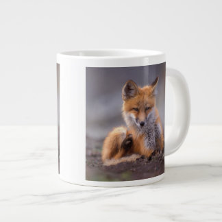 red fox, Vulpes vulpes, pup scratching itself, Giant Coffee Mug