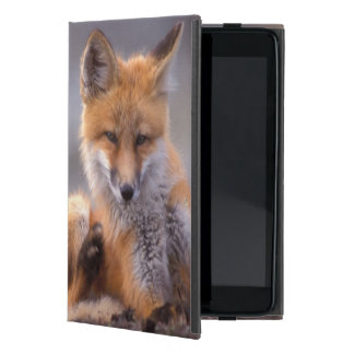 red fox, Vulpes vulpes, pup scratching itself, iPad Mini Cover