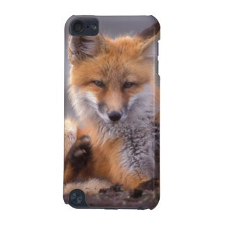 red fox, Vulpes vulpes, pup scratching itself, iPod Touch (5th Generation) Case