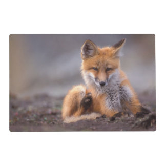 red fox, Vulpes vulpes, pup scratching itself, Placemat