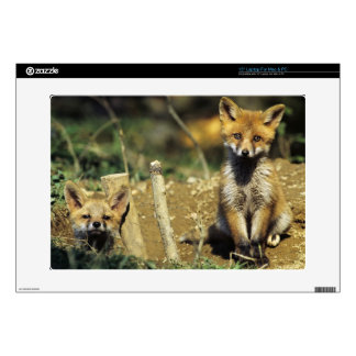 "Red Fox, Vulpes vulpes , young at den, 15"" Laptop Skins"
