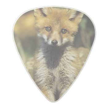 Red Fox  Vulpes Vulpes   Young At Den  Acetal Guitar Pick by DanitaDelimont at Zazzle
