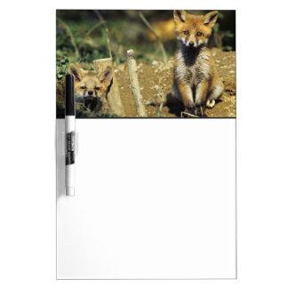 Red Fox, Vulpes vulpes , young at den, Dry-Erase Board