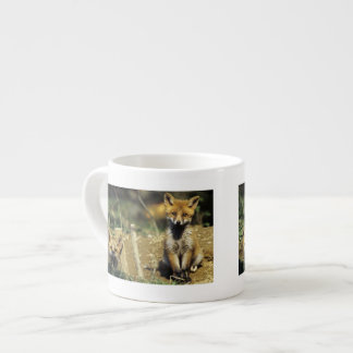 Red Fox, Vulpes vulpes , young at den, Espresso Cup