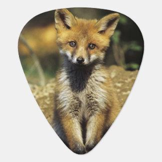 Red Fox, Vulpes vulpes , young at den, Guitar Pick