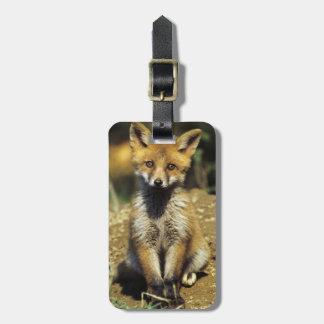 Red Fox, Vulpes vulpes , young at den, Luggage Tag