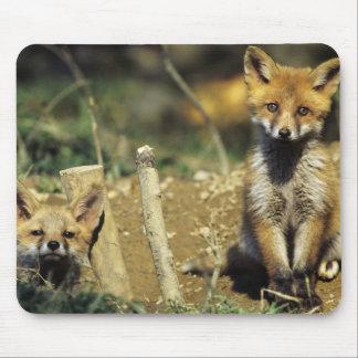 Red Fox, Vulpes vulpes , young at den, Mouse Pad