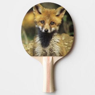Red Fox, Vulpes vulpes , young at den, Ping-Pong Paddle