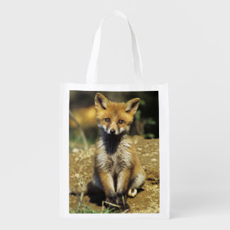 Red Fox, Vulpes vulpes , young at den, Reusable Grocery Bags