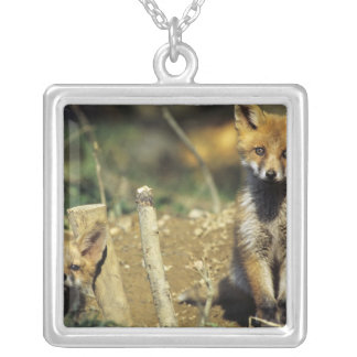 Red Fox, Vulpes vulpes , young at den, Silver Plated Necklace