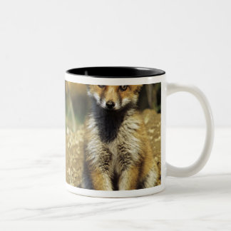 Red Fox, Vulpes vulpes , young at den, Two-Tone Coffee Mug