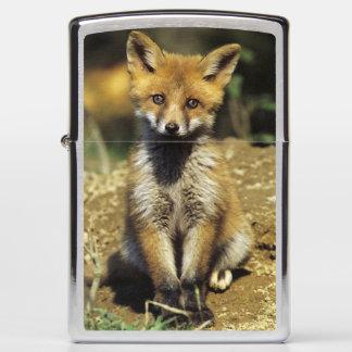 Red Fox, Vulpes vulpes , young at den, Zippo Lighter