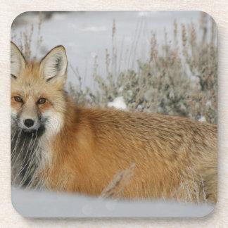 red-fox WIld Animal Gift idea Coaster