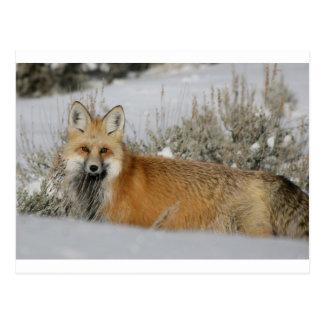 red-fox WIld Animal Gift idea Postcard