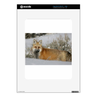 red-fox WIld Animal Gift idea Skins For iPad