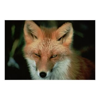 Red Fox Winking Print