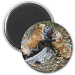 Red Foxes - Brotherly Love Fridge Magnet